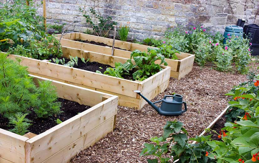 Emplacement Potager