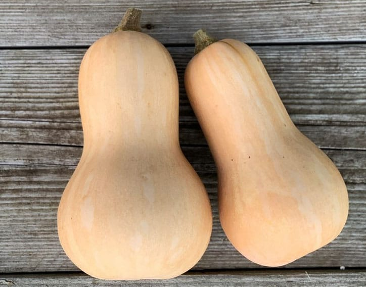 2 courges Butternut