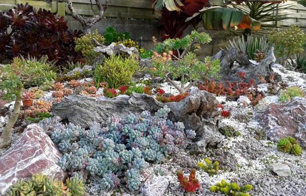 Rocailles Succulentes