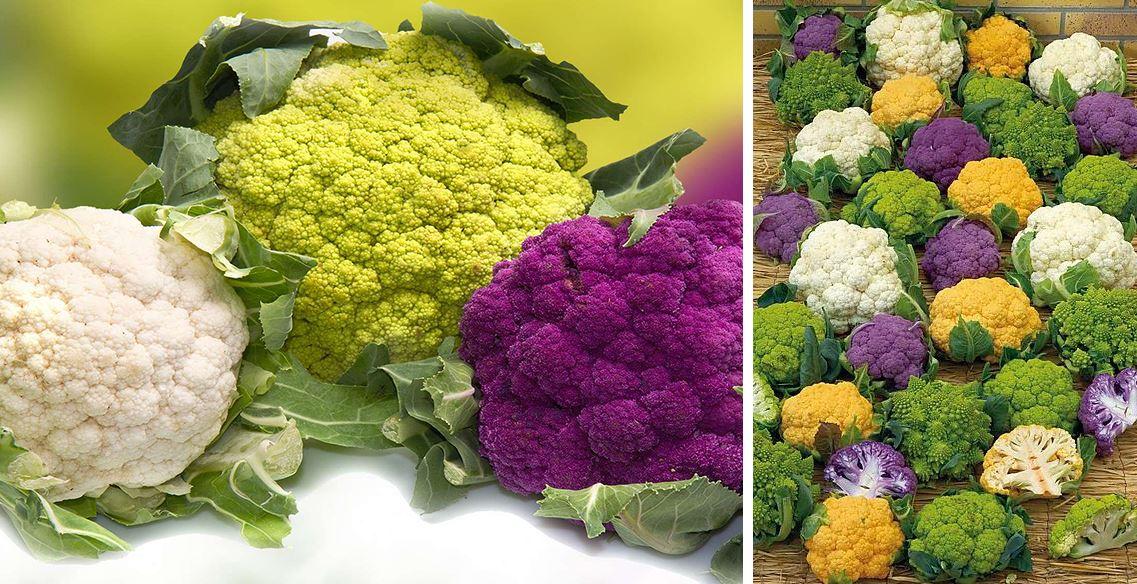 Variétés Chou Fleur couleurs différentes