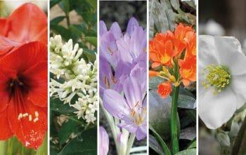 Fleurs Toxiques