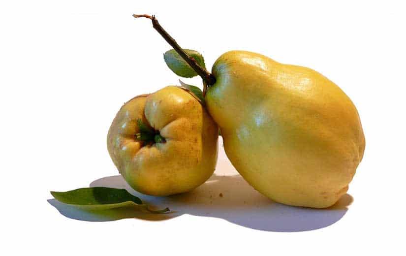 Fruits Cognassier