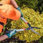 Entretien Jardin Liste Outils