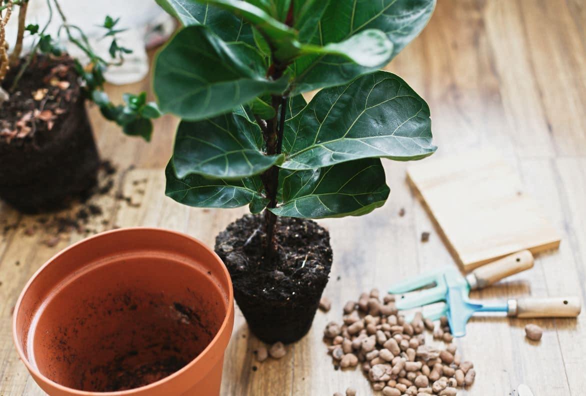 Comment Rempoter Plante Interieur
