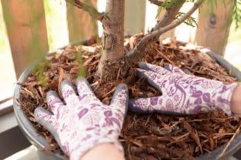 Paillage Protéger Plantes Hiver