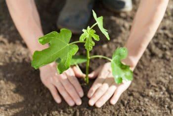 Planter Arbre Fruitier Quand Comment