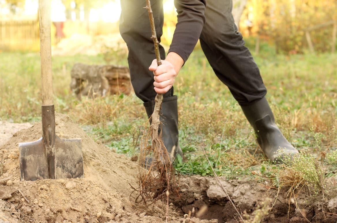 Arbre fruitier : Quand et comment le planter ? Tout connaître.