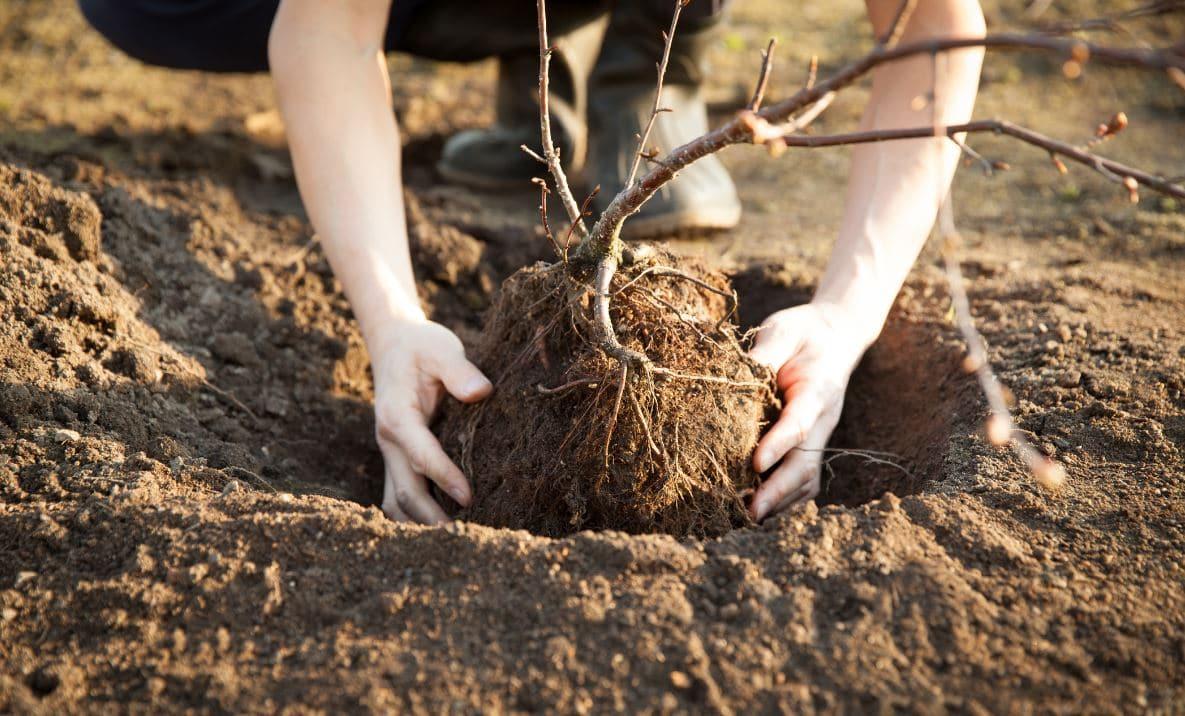 Comment Planter Un Arbre Fruitier arbre fruitier : quand et comment le planter ? tout connaître.