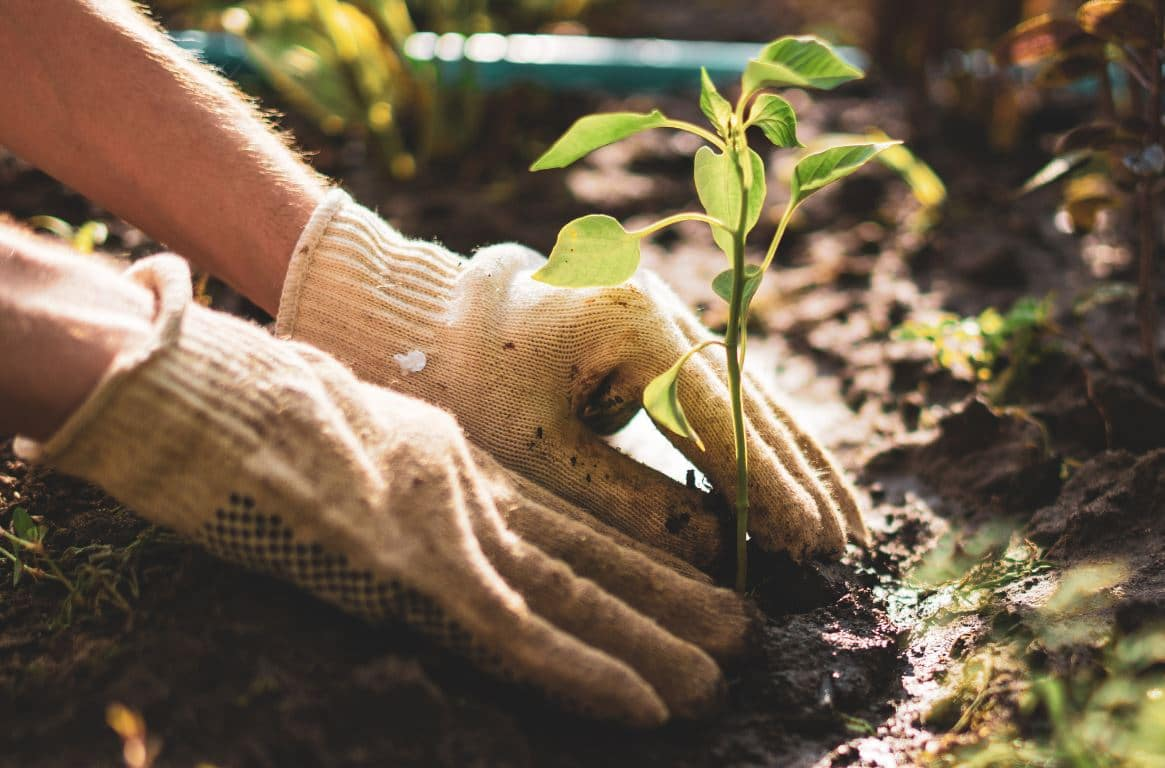 Bouture Jardin Plantes
