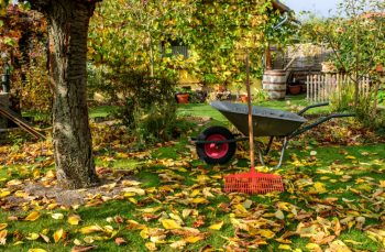 Jardin Automne Hiver