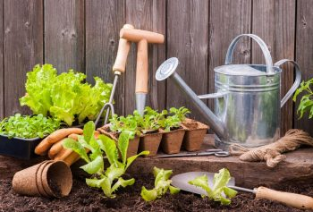 Jardinage Mars Les Bons Gestes