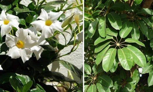 Plantes Intérieures Faciles Entretien
