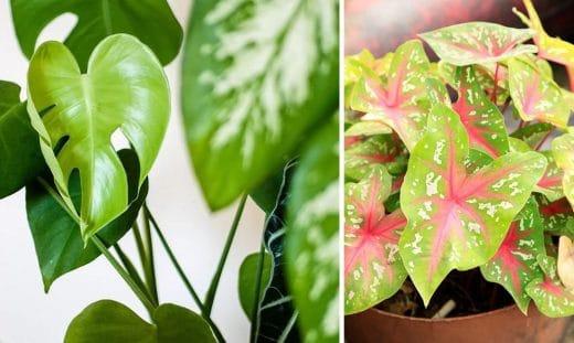 Plantes Interieures Grimpantes