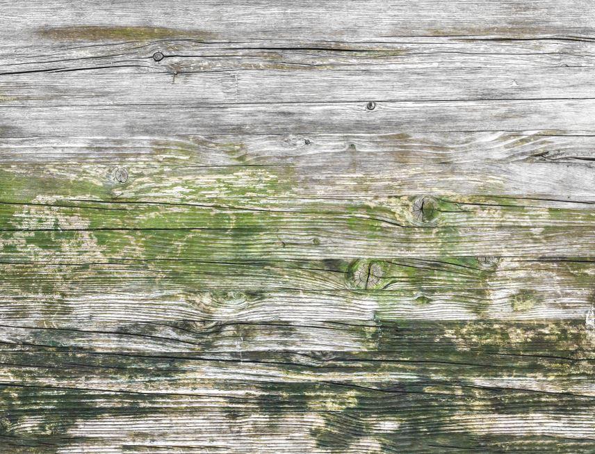 Preserver Bois Exterieur Moisissure