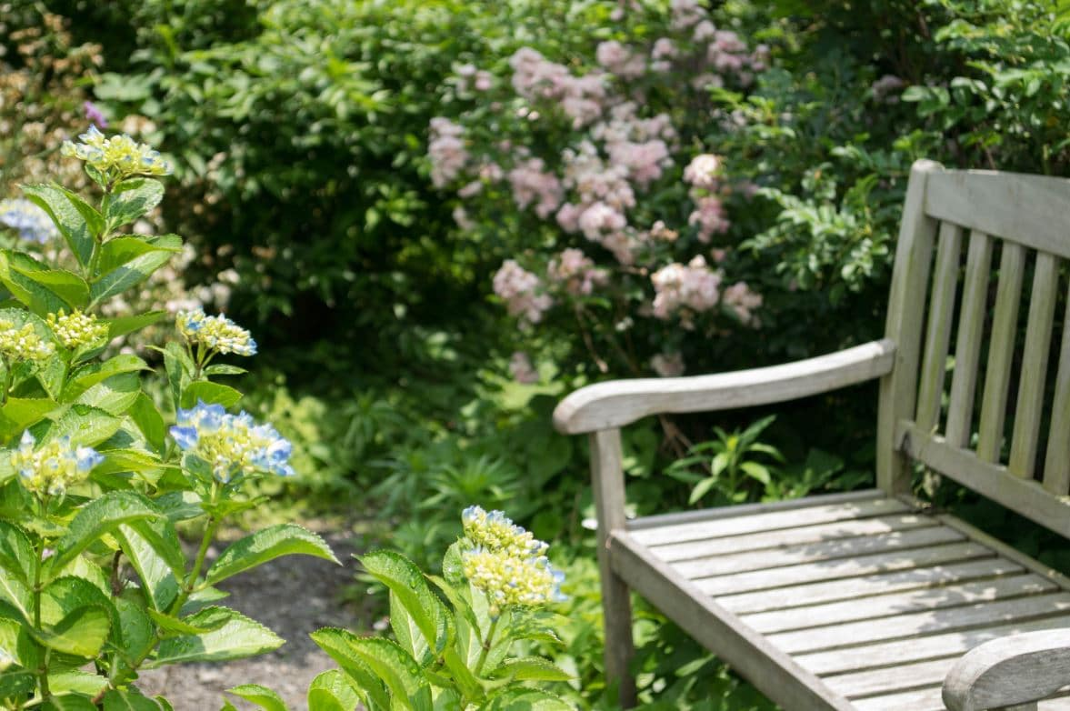 Jardin Anglais Plantes