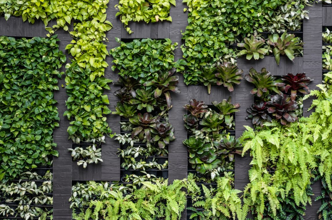 Mur Vegetal Deco
