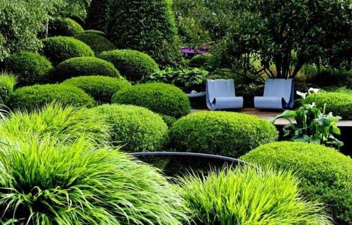 Plantes Jardin Moderne