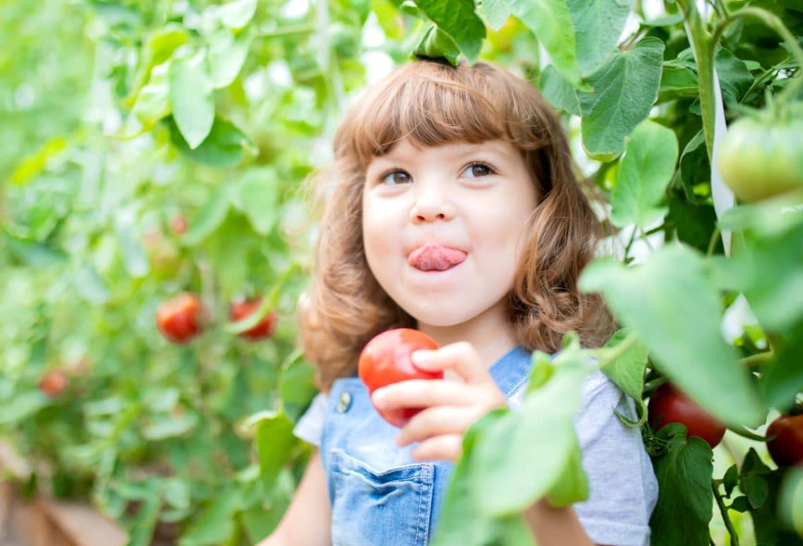 Cueillir Fruit Voisin