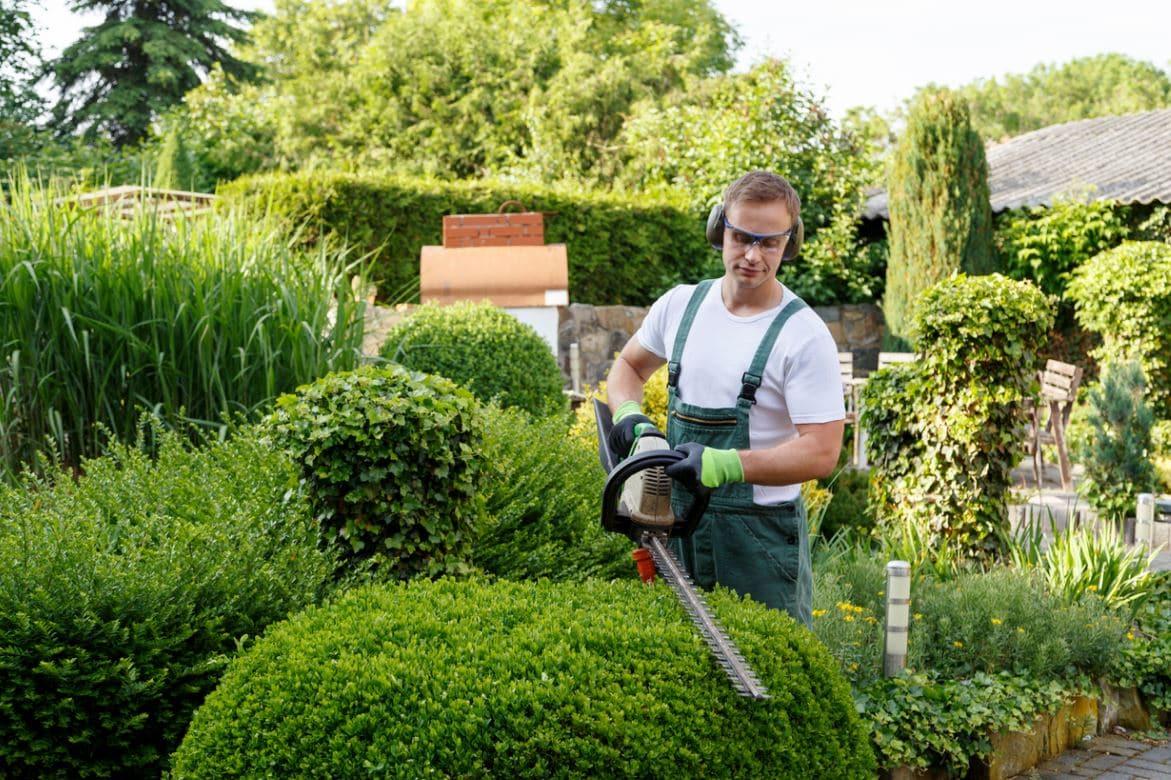 Jardinier Taille Haie Entretien