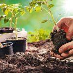 Legumes bon pour la santé à Planter