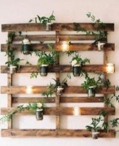 Palette Plante Et Lumière
