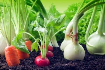 Placement Légumes Potager