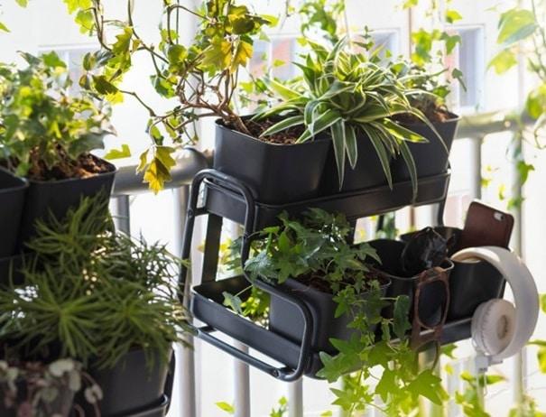 Plantes Sur Support