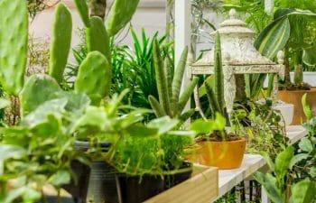 Nettoyer Taches Plantes Balcon