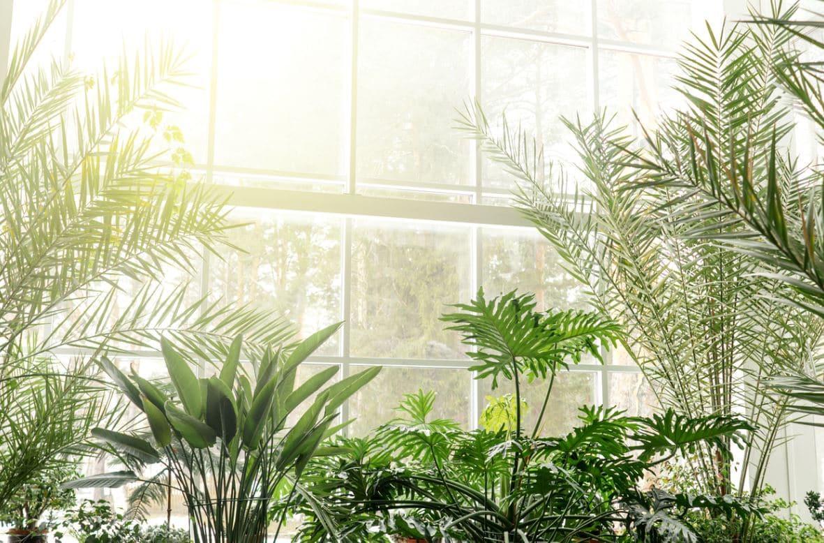 Aerer Plantes Intérieur