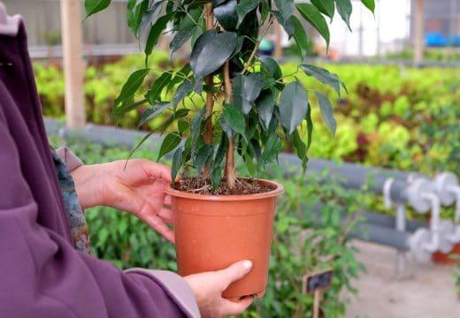 Bien Acheter Plantes D'intérieur
