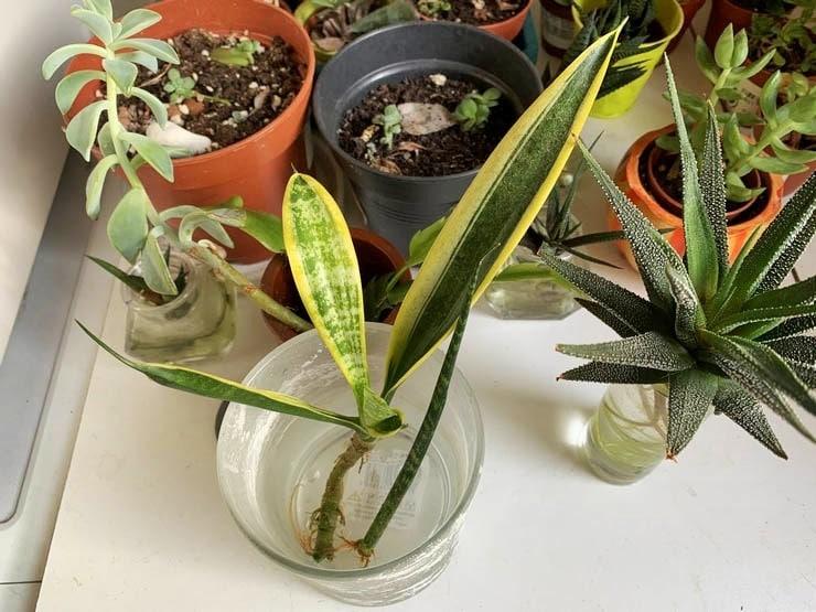Bouturage Plantes D Interieur