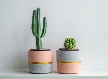 Cache Pot Plantes