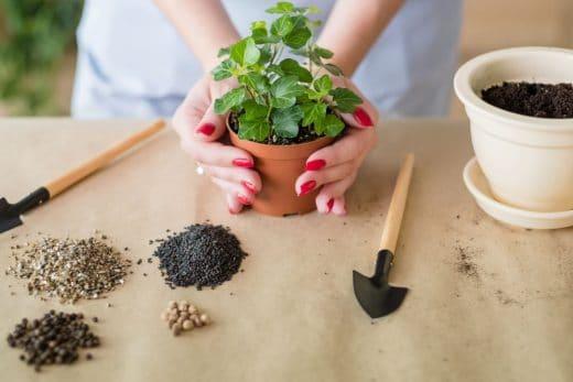 Engrais Spécialités Plantes Intérieur