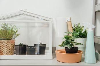 Mini Serre Plante D'intérieur