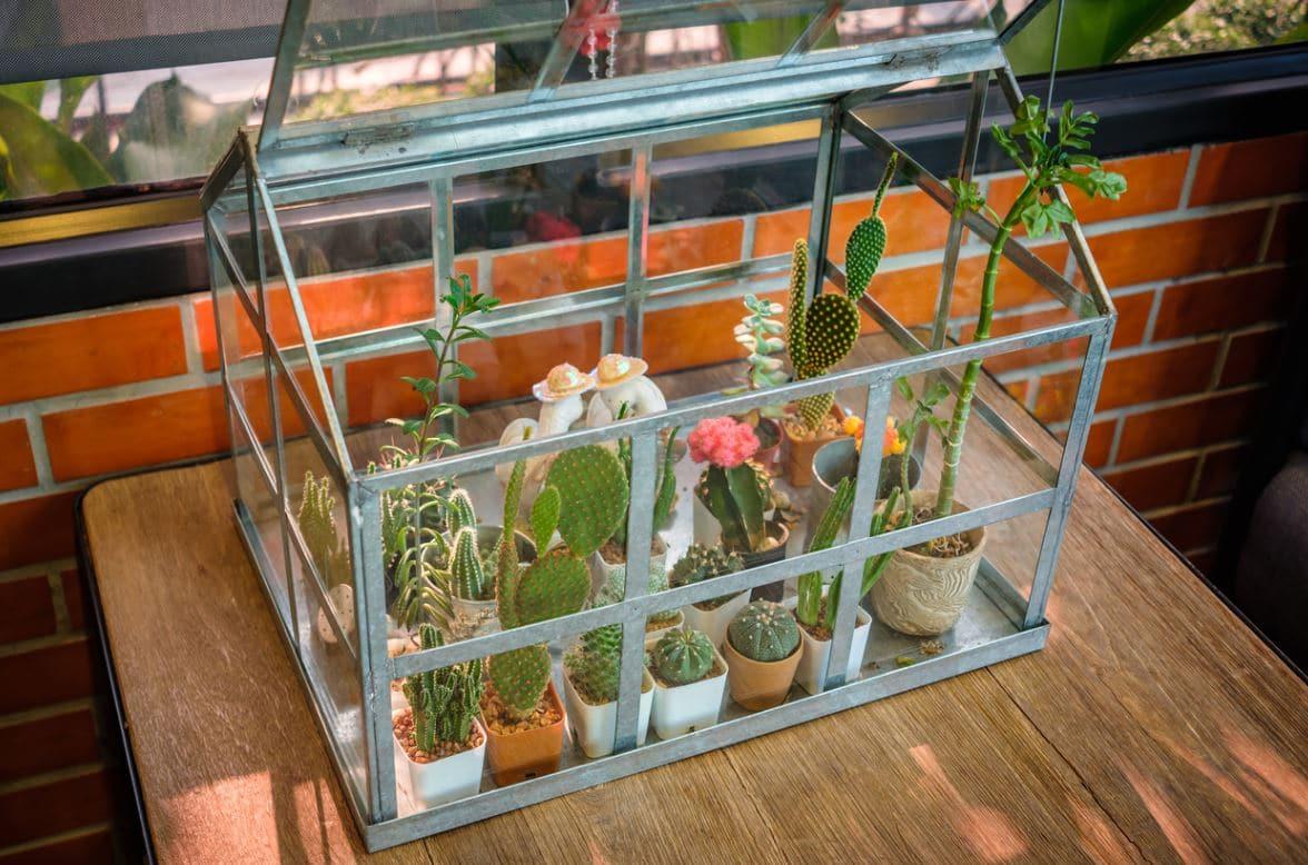 Mini Serre Plante Intérieur