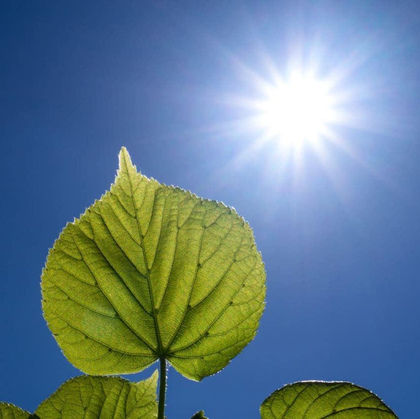 Photosynthèse Plante Intérieur