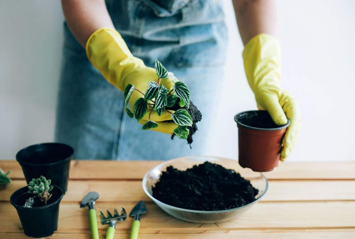 Plante En Pot Terreau