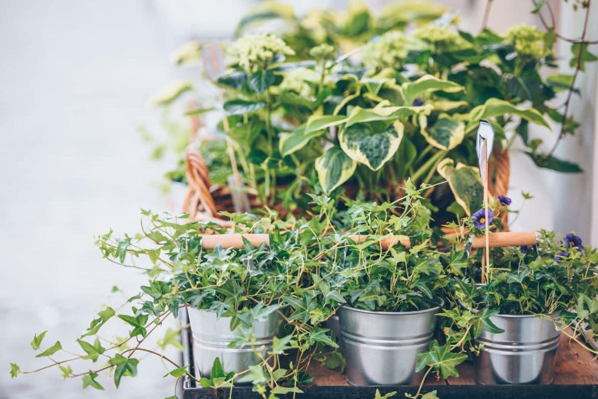 Plante Intérieur Hiver