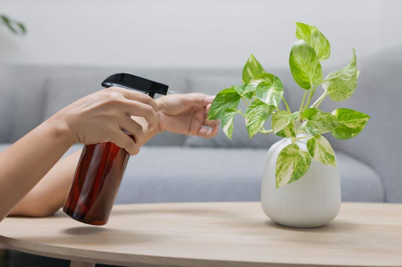 Plante Intérieur Prendre Soin