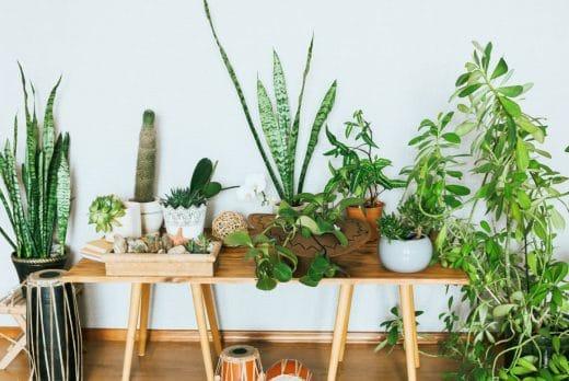 Plante Interieur Soigner