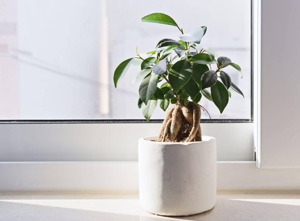 Plantes Intérieur Aérer