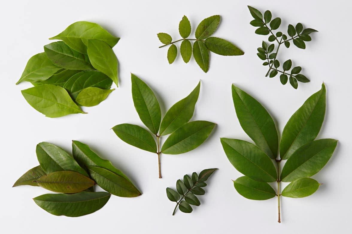 Plantes Intérieur Feuilles