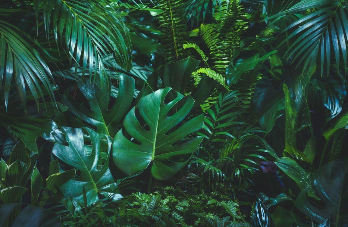 Plantes Vertes Intérieur