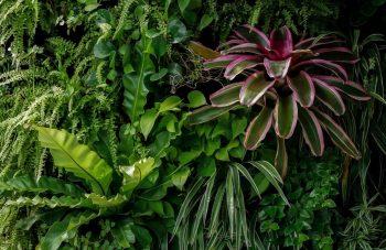 Plantres D'intérieur Associations