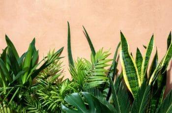 Vertus Plantes Vertes