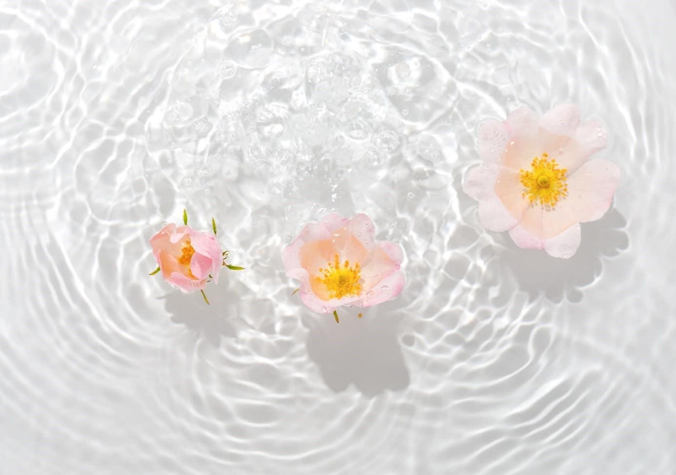 Boutons De Fleurs Flottant Dans L'eau