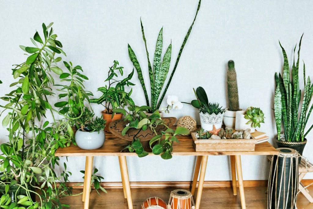 Plante Interieur Entretenir
