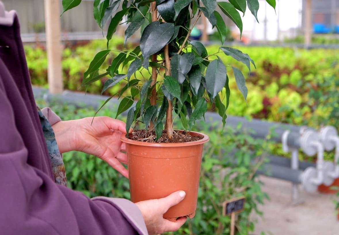 Achat Plante