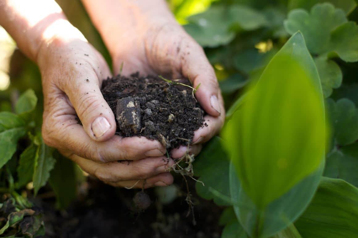 Compost Engrais