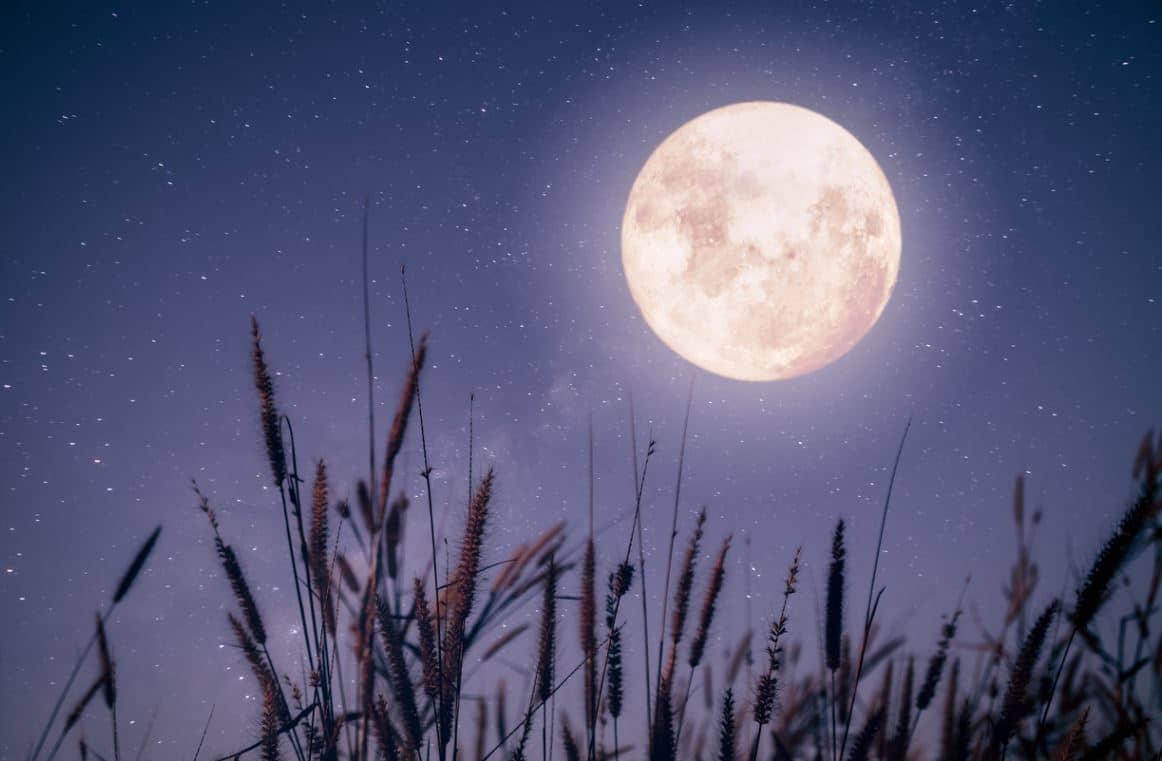 Influence De La Lune Sur Le Jardin